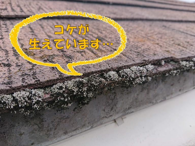 岩出市で屋根調査を行うと、スレート屋根の先にコケが生えていました