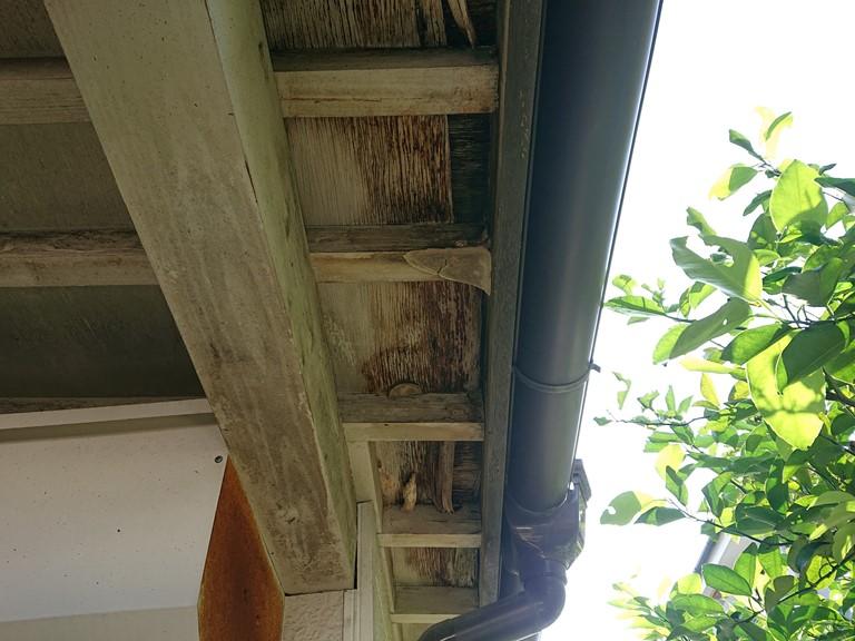 岩出市の屋根調査で軒天が腐食し破損していた