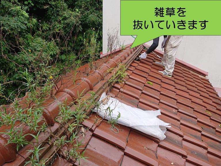 紀の川市で屋根に生えた雑草を根本まで抜いていきます