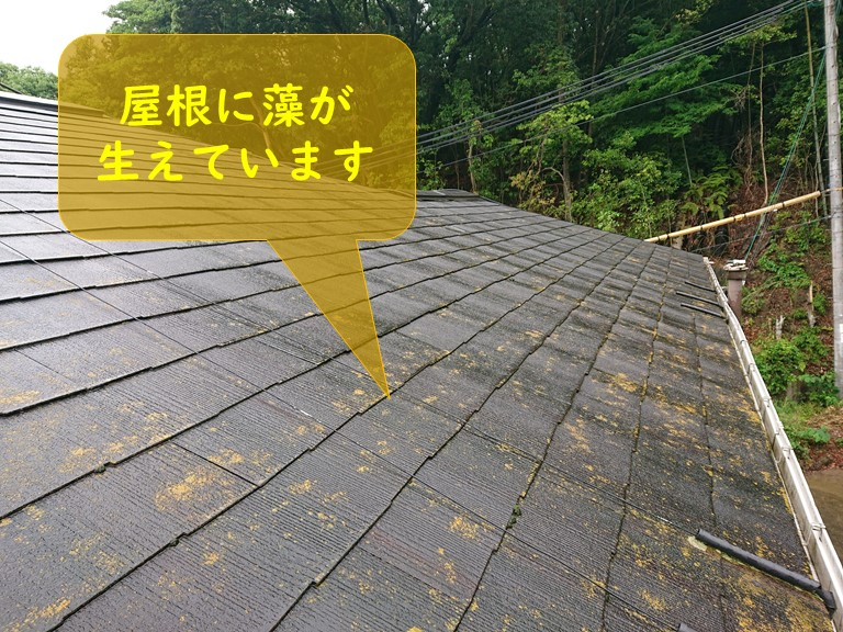 紀の川市で屋根に藻が生えており屋根塗装を行うサインです