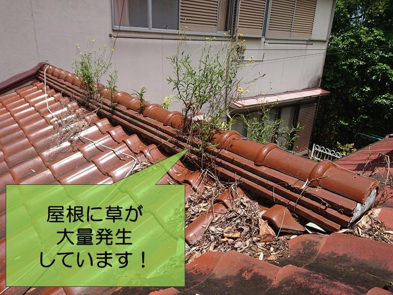 紀の川市の雨漏り調査で屋根に草が大量発生していました