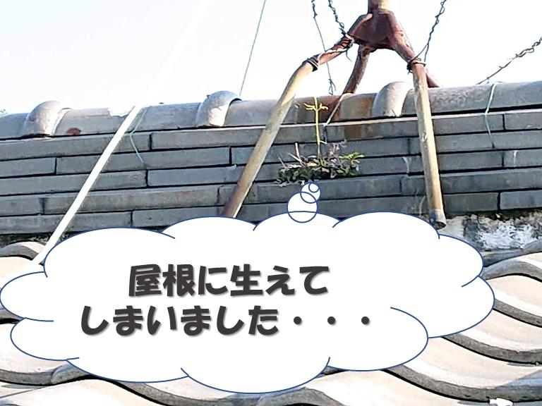 岩出市で屋根に雑草が!漆喰に雑草が生える原因をご紹介します